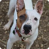 Adopt A Pet :: ZOEY - Philadelphia, PA