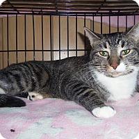Adopt A Pet :: BELLA - Medford, WI