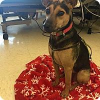 Adopt A Pet :: Mini Jasmine - Long Beach, NY