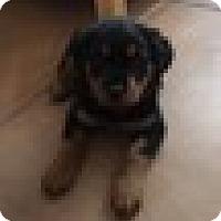 Adopt A Pet :: Sophie/Referral - Laurel, MT