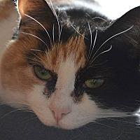 Adopt A Pet :: Melon - Toronto, ON
