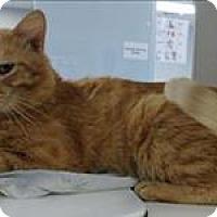 Adopt A Pet :: Peewee - Topeka, KS
