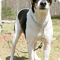 Adopt A Pet :: Prince Zeus - Canterbury, CT