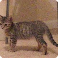 Adopt A Pet :: Espeon - Herndon, VA