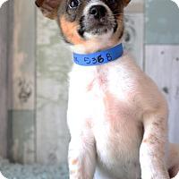 Adopt A Pet :: Mavrick- Adoption Pending - Waldorf, MD