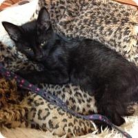 Adopt A Pet :: Jelly Bean - Bridgeton, MO