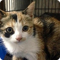 Adopt A Pet :: Sage - River Edge, NJ