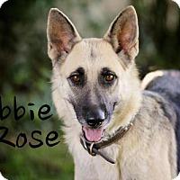 Adopt A Pet :: Abbie Rose - Joliet, IL
