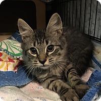 Adopt A Pet :: Newman - East Brunswick, NJ