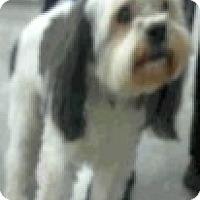 Adopt A Pet :: Remy-Adoption Pending - Boulder, CO