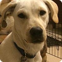 Adopt A Pet :: Katie - Cedar Rapids, IA