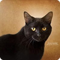 Adopt A Pet :: Luci - Bridgewater, NJ