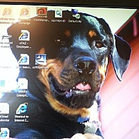 Adopt A Pet :: Merlin - Woodland Hills, CA