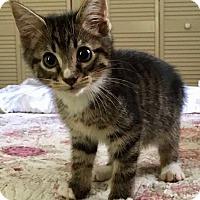 Adopt A Pet :: Django - Gainesville, FL