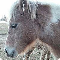 Adopt A Pet :: Elsa - Loudon, TN