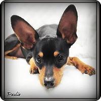 Adopt A Pet :: Paulie - Pascagoula, MS