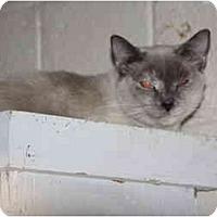Adopt A Pet :: Lydia - Owasso, OK