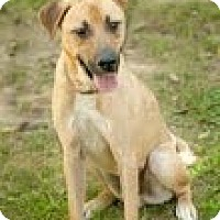 Adopt A Pet :: Cash - Lewisville, IN