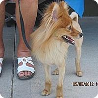 Adopt A Pet :: Robbie - apache junction, AZ