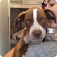 Adopt A Pet :: Moose - Los Angeles, CA
