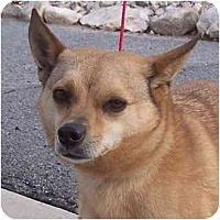 Adopt A Pet :: Viper - Las Vegas, NV