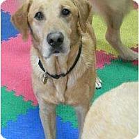 Adopt A Pet :: Soney - Racine, WI