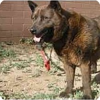Adopt A Pet :: Sasha - Phoenix, AZ