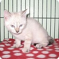 Adopt A Pet :: Twinkle - Shelton, WA