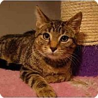 Adopt A Pet :: Tracey--PETSMART - Muncie, IN