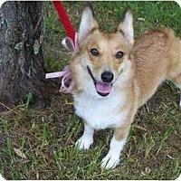 Adopt A Pet :: Gabby - Murfreesboro, TN