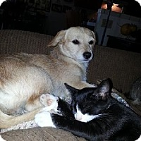 Adopt A Pet :: Danika Kalpakoff - Fresno, CA