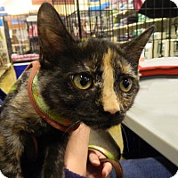 Adopt A Pet :: Carrie - The Colony, TX
