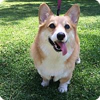 Adopt A Pet :: Charles - Buena Park, CA