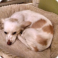 Adopt A Pet :: Freckles - Simi Valley, CA