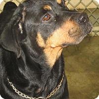 Adopt A Pet :: Makayla - Rocky Mount, NC