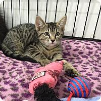 Adopt A Pet :: Vicki - Speonk, NY
