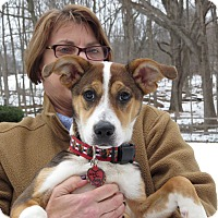 Adopt A Pet :: Kris Bryant- Foster to Adopt - Wood Dale, IL