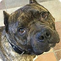 Adopt A Pet :: Wrangler - Kansas City, MO
