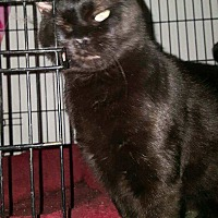 Adopt A Pet :: Pump (FELV+) - Monrovia, CA