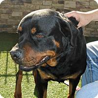 Adopt A Pet :: Chubbs - White Hall, AR
