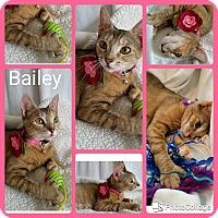 Adopt A Pet :: Bailey - Arlington/Ft Worth, TX