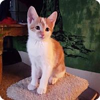 Adopt A Pet :: Jellybean - Glendale, AZ