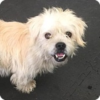 Adopt A Pet :: Taylor / ADOPTION PENDING - Woodinville, WA
