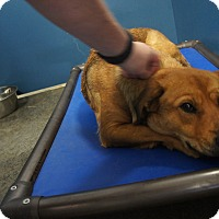 Adopt A Pet :: Angel - Henderson, NC