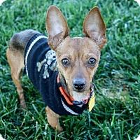 Adopt A Pet :: Calvin - 7.2 lbs! - Bellflower, CA