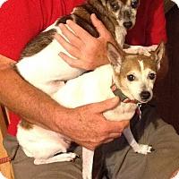 Adopt A Pet :: Collette - New Orleans, LA