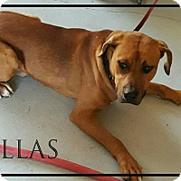 Adopt A Pet :: dallas - muskogee, OK