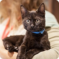Adopt A Pet :: Spurgos - Dallas, TX