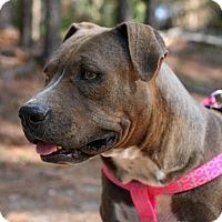 Adopt A Pet :: Maggie - Little Compton, RI