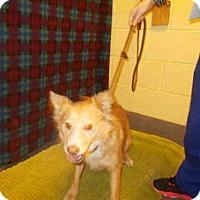 Adopt A Pet :: BERTA - Upper Marlboro, MD